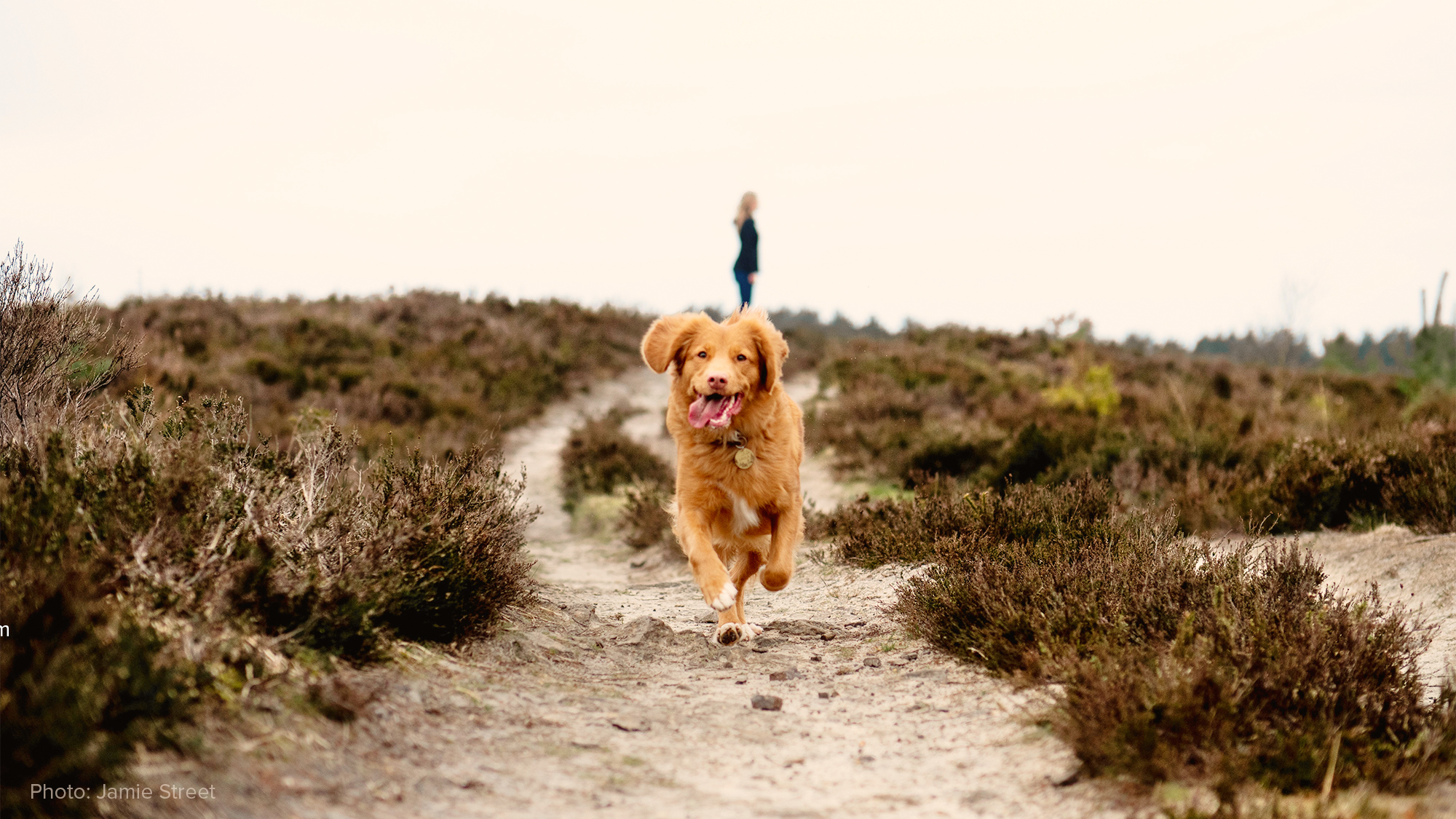 Pet joint health leads to increase overall mobility and quality of life